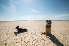Alvord Desert (Justin Knott) Tags: alvord desert nikon d800 rokinon 14mm lakebed eastern oregon sunny day shine dogs puppy mountain
