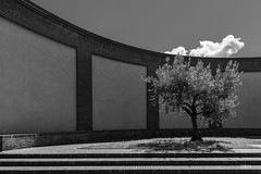 olive tree [ Lecco ] (Tobia Scandolara) Tags: light blackandwhite cloud como tree muro monochrome wall clouds contrast olive minimalism lakecomo lombardia minimalist luce lecco lagodicomo lombardy olivo lario tobia stoppani tobiascandolara monumentostoppani