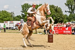 Pintos_Equitana_2016-9904 (tokerpress) Tags: messe pferde shou pintos tokerpress alexandertoker equitanaopenair ctokerpress2016 gestütgoldenepintos