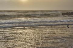 Golden Waves (Stueyman) Tags: ocean light beach 50mm gold gull sony au australia perth wa cottesloe westernaustralia nex nex7