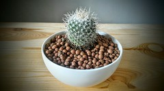 (193) Spikey - cacti succulents plants horticulture hobby hobbyist kevin chavez (Kev Chavez) Tags: enjoyinglife travel random kevinchavez explore hobby hobbyist takingphotos adventure lifestyle leisure scenic goodlife explorer magicmoments cactus succulents horticulture