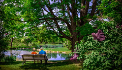 Old couple on bench (Florencetale) Tags: flowers trees summer sky woman sun lake man tree love nature water couple paradise branches hats tranquility lilac relaxation oldcouple coupleonabench