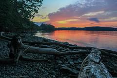 Driftlogs at dusk (Amy ::) Tags: cornwall moodna marsh river sunset driftwood logs driftlogs evening dusk