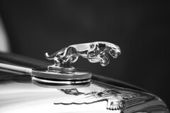 Jaguar Hood Ornament (hilarymcurrie) Tags: road old travel wallpaper blackandwhite sculpture white black blur reflection art english classic texture monochrome beautiful field car animal statue metal wall modern contrast race dark emblem concrete photography for mirror high jumping highway automobile shiny european image bokeh outdoor antique background room label tiger text rich transport fine picture racing grill photograph jungle elite stunning restored vehicle resolution british hi jaguar wealthy chassis collectors expensive decor res copy depth leaping snarling polished