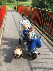 Out with Fudge (Brabinos) Tags: dog twins pug trike toddlers