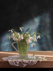 True Strength Is Delicate (panga_ua) Tags: flowers light stilllife white color art water composition canon spectacular march wooden spring artwork artistic availablelight illumination naturallight ukraine poetic spotlight creation snowdrops imagination translucent natalie delicate sunrays arrangement doily tabletop bodegon morningsun naturemorte panga artisticphotography rivne whiteflowers naturamorta glassvase galanthusnivalis artphotography sharpfocus oaktabletop candlemasbells greenstems earlyflowering truestrengthisdelicate marystapers  nataliepanga frostedglassvase pastelsbackground fairmaidoffebruary bulbousviolet emblemofearlyspring maidsoffebruary