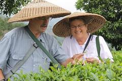 Tea picking (Purple Giraffe) Tags: china green tea yangshuo picking teapicking