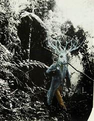 Los señores del bosque