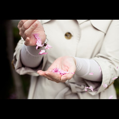 (Masahiro Makino) Tags: woman japan photoshop canon cherry eos petals hands kyoto wind blossoms blow adobe    sakura f18 lightroom ef50mm  60d 20110502144951canoneos60dls640p soldatgettyimagesaugust2012