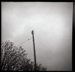 Telegraph Pole (Saturated Imagery) Tags: blackandwhite 120 film mediumformat square iso400 toycamera grain pole cables telegraphpole ilford selfdeveloped plasticlens meanwood kodaktrix400 dianadeluxe microphen epsonv500 photon120 filmdev:recipe=7536