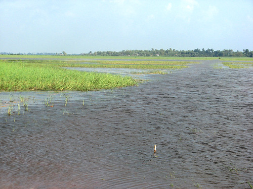 Rice Field Fishery, Kampong Thom, Cambodia. Photo by Alan Brooks, 2011