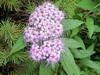 Pink (howardj47) Tags: lumix panasonic howardj zs7