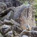 La figura nella roccia (La Chaquira)