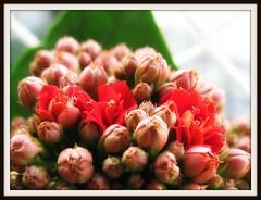 Quinta Flower da janela do ateliê! (Joana Joaninha) Tags: flores minasgerais amor felicidade janela alegria feli joanajoaninha