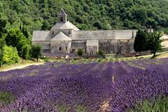 Senanque Abbey (France) (annalisabianchetti) Tags: france abbey francia senanque abazia