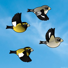 Birdorable Evening Grosbeaks (birdorable) Tags: cute bird evening flight finch grosbeak eveninggrosbeak birdorable