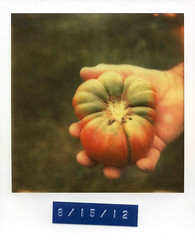 Ripened (Caleb Jenkins) Tags: camera old red color colour film vegetables analog vintage garden tomato polaroid sx70 photography hand farm framed border grow august nostalgia growth frame dating land instant series analogue date notdigital analogphotography instantcamera ripening labeling ripe impossible filmgrain instantphotography ripen gren polaroidsx70 warmcolors polaroidlandcamera ripened subsistence instantfilm photoseries polaroidphotography traditionalphotography polaroidframe polaroidsx70landcamera livingofftheland hugetomato polaroidborder px70 colorfilmphotography producefarm instantfilmphotography vegetablegaden impossibleproject impossiblefilm impossibleprojectfilm coolfilm px70coolfilm subsistencefarm impossibleprojectcoolfilm