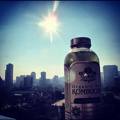 Kombucha tower, downtown Honolulu
