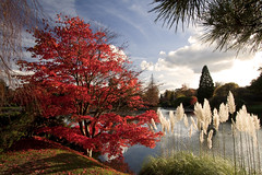 Sheffield Park - Autumn (JamboEastbourne) Tags: park autumn england sussex sheffield east national trust