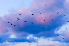 Halla Arboretum (eric_hevesy) Tags: park blue sky tree nature canon island fly photo interesting arboretum korea crow crows jeju halla