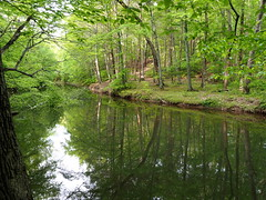 The arc in nature (pilechko) Tags: trees light color green water creek reflections river woods pennsylvania newhope buckscounty bowmanshill