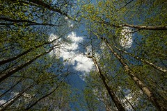 Look Up (Karen_Chappell) Tags: travel blue trees sky green up clouds pov ottawa wideangle canonefs1022mm stonyswamp