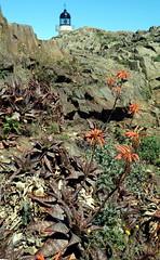 Cap de Creus (Signore Aceto) Tags: landscape outdoor sony catalonia girona catalunya catalua catalogne capdecreus sonydscrx100