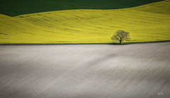 champtre (lafargenicolas) Tags: travel light art nature fleur rural jaune work landscape photo photographie farm working vert arbre champ