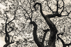 (Ivn Rubn) Tags: old naturaleza brown tree caf monochrome sepia natural shapes minimal textures nostalgia rbol formas minimalismo abstracto viejo abstarct texturas longing monocromtico