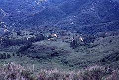 Double Bow Knot (birdgal5) Tags: california marincounty mounttamalpais millvalley 35mmslide mounttamalpaisstatepark march1980 55mmf35micropc nikkormatel mounttamalpaissp doublebowknot eastpeakofmounttamalpais crookedestrrintheworld tamalpaismuirwoodsrailway