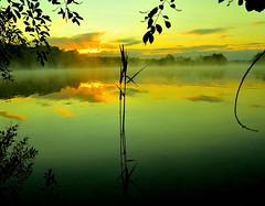 """ Sunrice Dreilndersee "" (Kalbonsai) Tags: trees mist water colors clouds germany nikon nebel 1855mm waterscape sunrice zonsopkomst dreilndersee d5100 naturphotography naturshot"