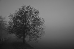 Foggy Morning (Jordi sureda) Tags: morning blackandwhite naturaleza blancoynegro nature monochrome forest landscape one blackwhite nikon arboles negro natura un arbres catalunya fotografia nikkor niebla foggyforest jordisureda