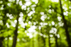 treetop twinkle (katiezhao) Tags: trees blur tree green forest photography nationalpark nikon bokeh treetrunk dslr congaree congareenationalpark bokehlicious bokehwhore bokehful d7000 bokehoftheday nikond7000 bokehstandard