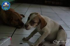 DSC08175 (OrgNicAmb) Tags: dogs perros nicaragua refugio mascotas masaya peluditos recataditos casahogarlucito orgnicamb