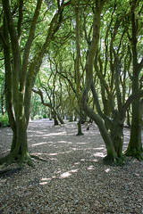 The woods at Highcliffe Castle (IanGro) Tags: trees highcliffebeach woods