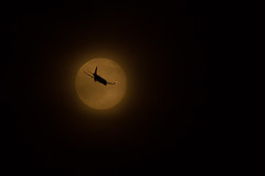 Fly me to the Moon (JMFusco) Tags: moon airplane aircraft