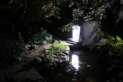 LED Studio-in-a-Box (FotodioxPro) Tags: statue night garden pond goldfish path stones buddha ornamental studiolighting goldfishpond productphotography frogstatue ledlight fotodiox studioinabox portablelighting fotodioxpro