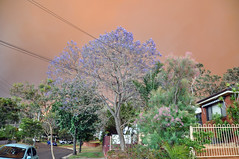 0004 Bushfire Smoke.jpg (Tom Bruen1) Tags: 2013 bushfire gardeniaparade greystanes jacarandatree smoke