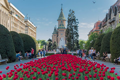 Timisoara, Romania (Iustin Ouatu) Tags: timisoara romania red tulip tulips flower flowers floral landscape landscapephotography life light lines lights landmark composition city culture cultural d3200 discover explore excursion europe nikon nikontop nature nikkor nikond3200 natural blue sky sun summer outdoors outdoor