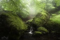 Talelight (Anderony) Tags: light summer luz creek forest bosque verano riachuelo guipzcoa gipuzkoa espaaspain