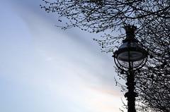 LIGHT ON LIGHT (DESPITE STRAIGHT LINES) Tags: city morning sky urban tree london nature clouds sunrise dawn nikon streetlight branches capital southbank hues d7000 ilobsterit