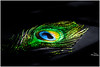 Mayilpeeli....Peacock Feather (Vinu Thankachan) Tags: old blue green love eyes nikon alone blueeyes romance memory lover oldmemories peacockfeather mayilpeeli d3100 nikond3100 mayilpeelipeacockfeather mayilpeelieyes