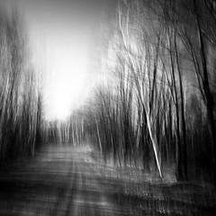 Light and shadows V (rsc_escher) Tags: camera trees tree art nature monochrome square landscape mono movement fine monotone icm intentional intentionalcameramovement bwartaward asquaresuperstarstemple copyrightrscescheryahoocom