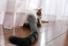 Tom,my kitty relaxing (^_^) (♥ Spice (^_^)) Tags: light shadow pet color animal japan cat canon geotagged photography eos photo asia flickr bokeh curtain tail picture kitty 日本 5d woodenfloor companion 動物 ねこ 光 saitamaken 影 写真 猫ちゃん 埼玉県 子猫 キャノン 春日部市 kasukabeshi コンパニオン ペット にゃんちゃん markⅱ ボケ カラー ネコ にゃん子 gettyimagesjapan12q2