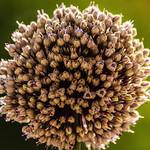 Flower thumbnail