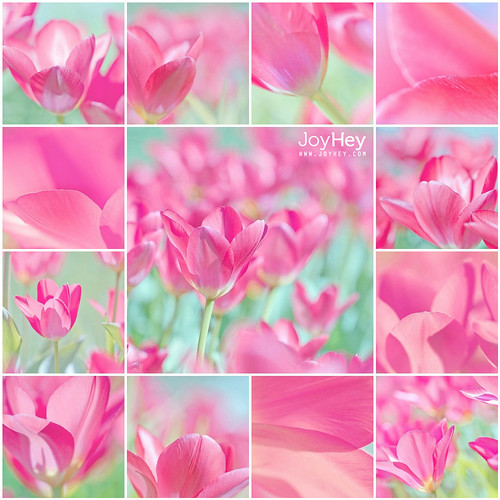 Tulip World / JoyHey