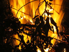 Bonfire (5of7) Tags: wood orange black hot leaves silhouette yellow canon fire nice niceshot flames powershot burning flame burn serene fav 4fav sx30