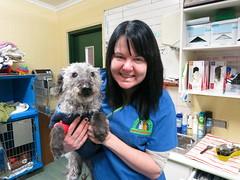 Jato & Erin (Rayya The Vet) Tags: canine whippetcross poodlecross
