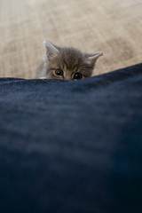 I see you... (danklar) Tags: kitten canonef2470mmf28l