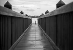 Beach Time (canon ftbn +50mm) (PositiveAboutNegatives) Tags: blackandwhite bw dog film beach canon 50mm florida kodak trix boardwalk fd canonftb ftbn blackandwhitefilmphotography freefilmimages freefilmpictures